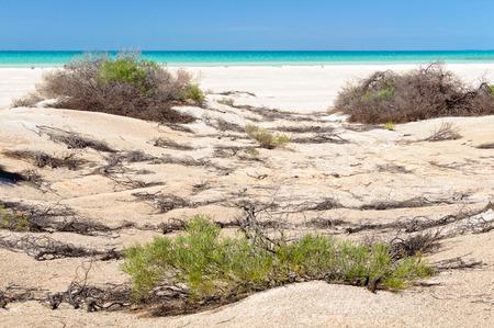 Shrubs at Shell Beach - Denham, WA, Australia Archivio Fotografico - 125675937