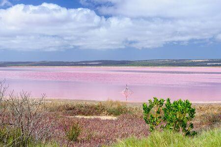 Incredible Pink Lake - Gregory, WA, Australia