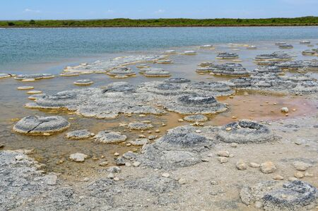 Stromatolites are living rock-like fossils that have been producing oxygen for about 3.5 billion years - Lake Thetis, WA, Australia Archivio Fotografico - 125687698