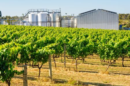 Leeuwin Estate is one of the five founding wineries of the region - Margaret River, WA, Australia
