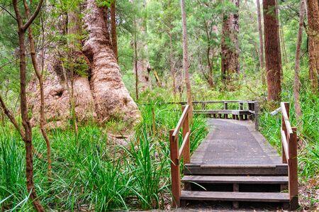 Ancient Empires Walk at the Valley of the Giants - Walpole, WA, Australia
