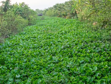 Fully overgrown canal in the Mekong Delta - Vinh Long Island, Vietnam