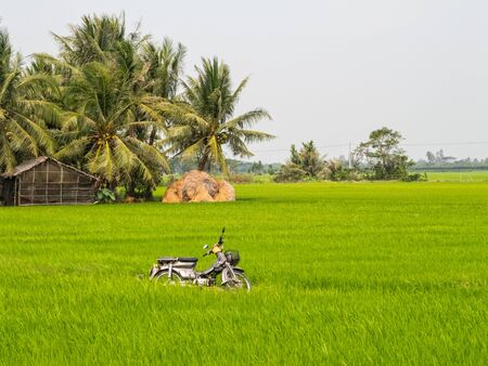 Moped in a lush green rice paddock in the Mekong River Delta - Tra Vinh, Vietnam Zdjęcie Seryjne