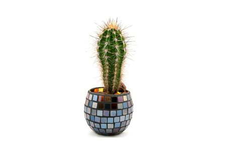 Cactus in decorative pot  photo
