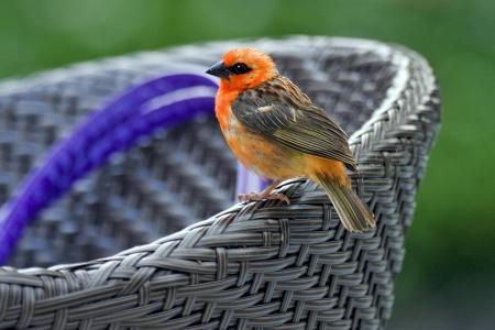 little bird rest in a chair Stock Photo