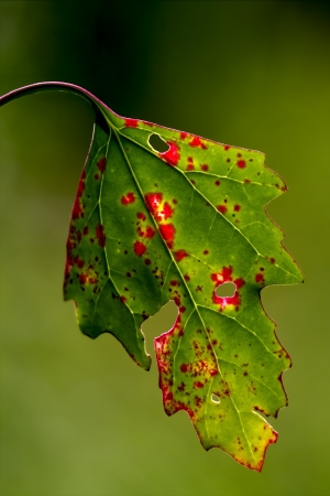 foglia: a autumn leaf Stock Photo