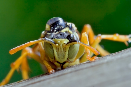 an Hymenopterans with a drop in his hand