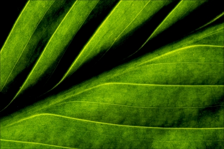 a part of a green leaf and thetexture Stock Photo