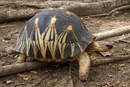 a turtles heart in madagascar nosy be Stock Photo
