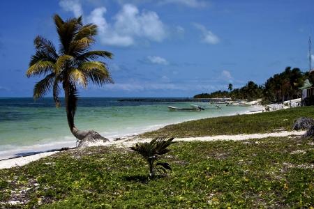 un palmier dans le vent dans le lagon bleu de Sian Kaan au Mexique et en bateau et la cabine Banque d'images