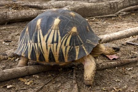foglia: a turtle Stock Photo