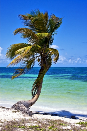 a palm in the wind in the blue lagoon in sian kaan mexico