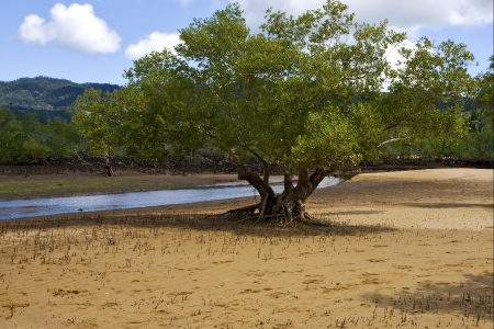 tree in the lokobe reserve in the coast of madagascar