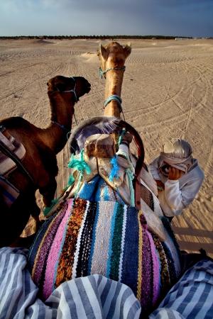 saddle camel: douze,tunisia,camel and people in the sahara