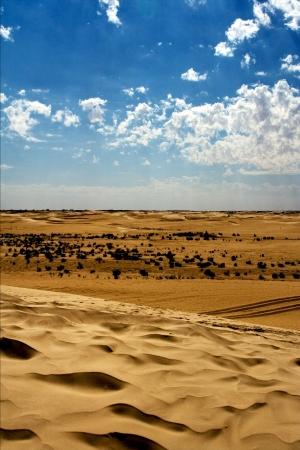 dune in the sahara desert and some bush photo