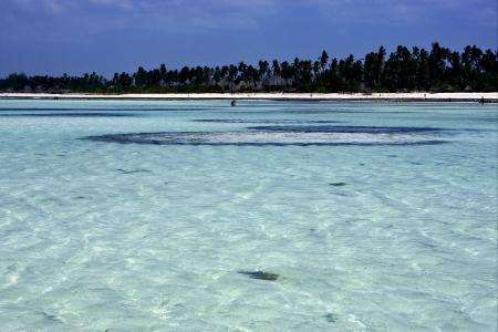 beach seaweed and coastline in tanzania zanzibar