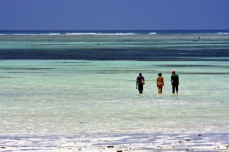 beach seaweed and people in tanzania zanzibar Stock Photo
