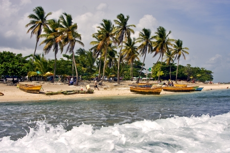 ocean coastline  work palm and tree in  republica dominicana photo