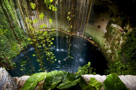 cenote ill kill mexico the plant and the water in the hole