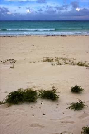 sea weed: tropical lagoon hill navigable  froth cloudy  sea weed  and coastline in mexico playa del carmen  Stock Photo