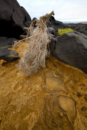 musk: flower branch abstract pond water coastline salt in  lanzarote spain musk  rock stone sky     and summer   Stock Photo