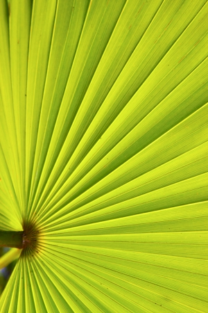 green texture of a palm in the isle bahamas photo