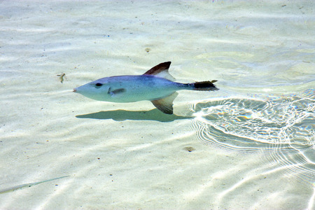 little fish   isla contoy    in mexico froath and    foam  the sea drop sunny day  wave photo
