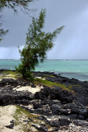 belle: beach rock and stone in belle mare mauritius Stock Photo