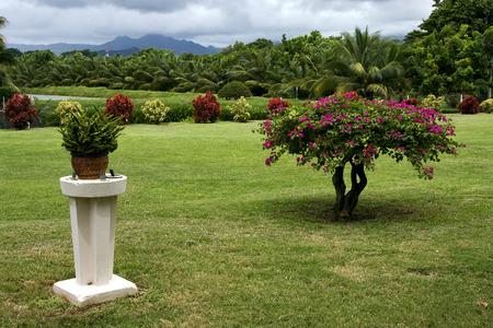 beau: garden in  beau plan isle of mauritius Stock Photo
