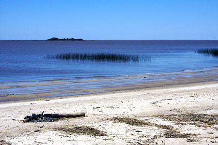 sea weed: beach and wood  in rio de la plata colonia del sacramento uruguay and sea weed Stock Photo