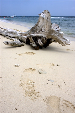 footstep: beach rock stone footstep  boat  people and tree in  republica dominicana