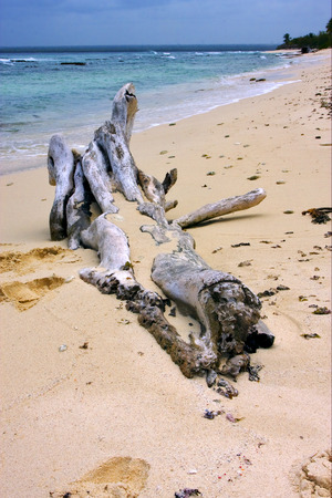 footstep: beach rock stone  footstep and tree in  republica dominicana