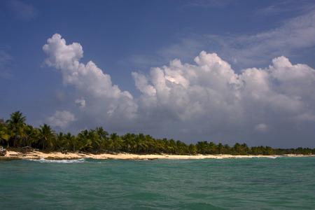 ocean coastline  palm and tree in  republica dominicana Stock Photo