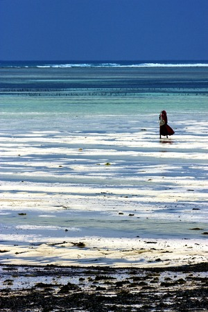 the flood tide: A masai man in the sea in zanzibar