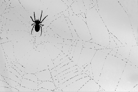arachnids: a spider and the drop web in the light