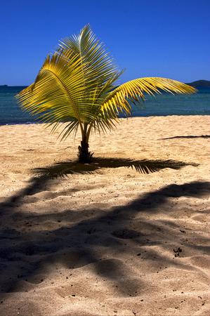 coastline: madagascar palm lagoon and coastline