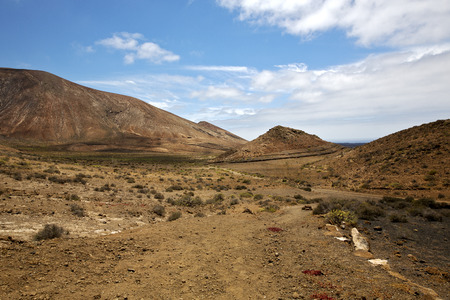 fleur plante timanfaya brousse dans Los Volcanes volcanique ciel pierre rocher colline et en �t� Lanzarote Espagne