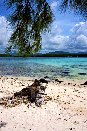 cocos: indian ocean some stone in the island of deus cocos in mauritius Stock Photo