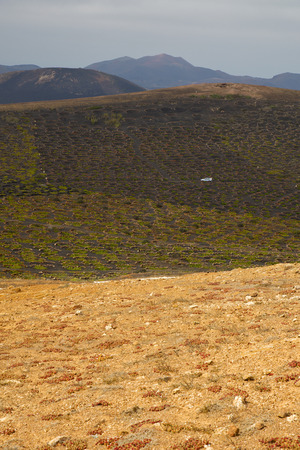 viticulture: car viticulture  winery lanzarote spain la geria vine screw grapes wall crops  cultivation barrel