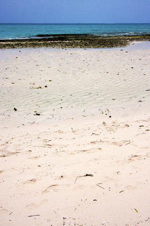 froth: sand bank plant africa coastline froth foam  in the  blue lagoon relax  of zanzibar Stock Photo