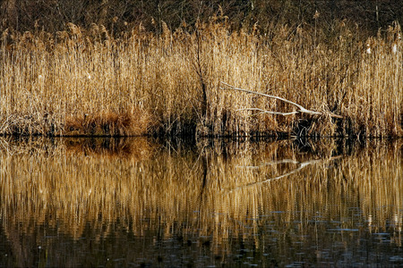 marshy: autumn lake and marsh moor marshy abstract   in the north of italy