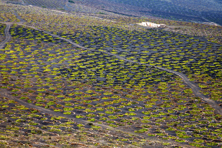 viticulture: abstract winery lanzarote spain la geria vine screw grapes wall crops  cultivation viticulture