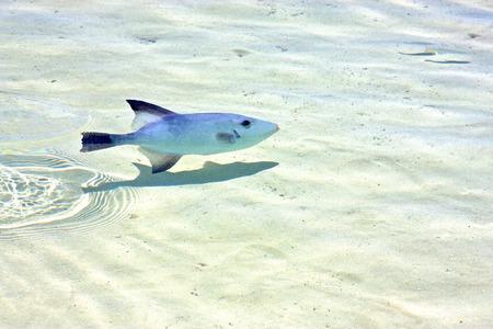 sunny day: peque�a Isla Contoy peces en froath M�xico y la espuma del mar caer ola d�a soleado