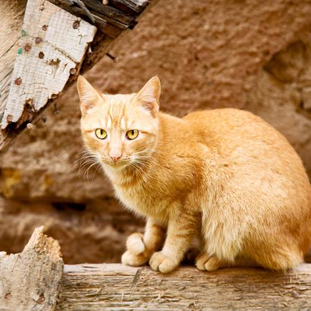 feline: feline in morocco africa and sweet face