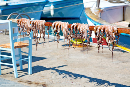 octopus        drying  in the sun europe greece santorini and light Reklamní fotografie - 45088133