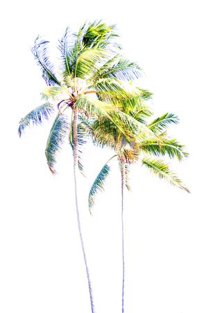zanzibar: zanzibar africa front palm highlights Stock Photo