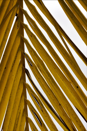 bahama: yellow  close up of  leaf in gran bahama Stock Photo