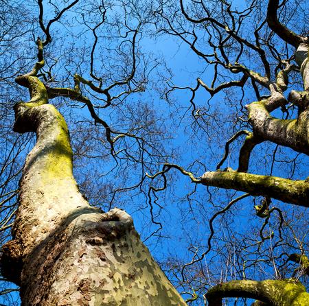 sky brunch: park in london spring sky and old dead tree
