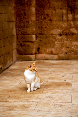 alone cat in africa morocco and house background Stock Photo