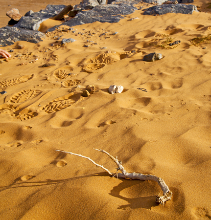 petrified fossil: old fossil in  the desert of morocco sahara and rock  stone sky Stock Photo